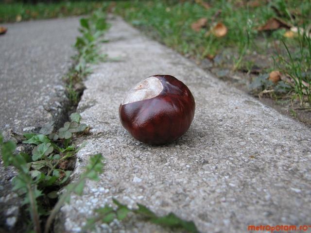chestnutt